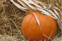 4 Fearless Job Hunting Tips for Thanksgiving