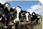 Why cattle-call recruiting doesn't work